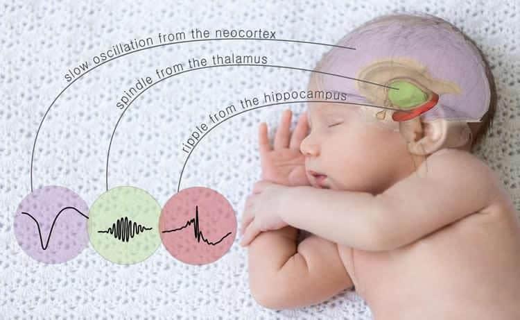 sleep-memory-brain-waves-neurosciencenews