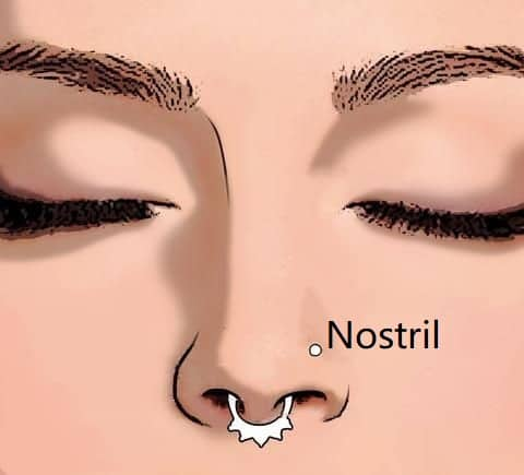 types of nose piercings types Nostril